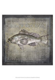 Buy Ocean Fish II at AllPosters.com