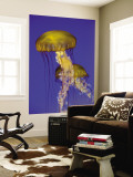 Buy Jellyfish in Monterey Bay Aquarium at AllPosters.com
