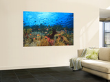 Buy Schooling Anthias Fish, Wetar Island, Banda Sea, Indonesia at AllPosters.com
