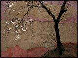 Plum Tree against a Colorful Temple Wall Framed Canvas Print