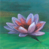 Waterlily I