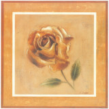 Golden Roman Rose