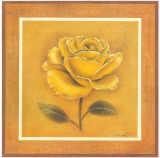Yellow Roman Rose