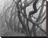 Buy Potato Creek Gnarled Trees Black and White at AllPosters.com