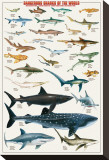 Buy Dangerous Sharks at AllPosters.com