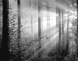 Buy Light Through The Trees II at AllPosters.com
