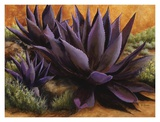Purple Agaves on the Rocks