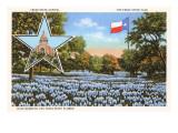 State Capitol, Austin, Texas, Blue Bonnets