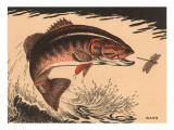 Buy Woodcut of Bass at AllPosters.com