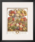 Twelve Months of Fruits, 1732, September