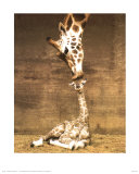 Giraffe, First Kiss Art Print