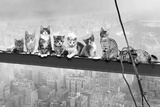 Cats On Girder- Poster