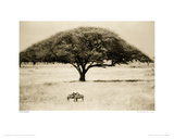 The Sheltering Tree, Serengeti