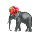 Buy Elephant at AllPosters.com