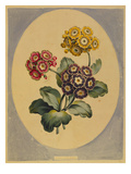 A Collection of Flowers Drawn after Nature and Disposed in an Ornamental and Picturesque Manner