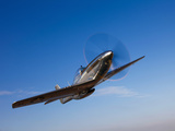 A P-51D Mustang in Flight