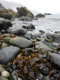 Seaweed Among Stones on a Rocky Shore with Gentle Surf