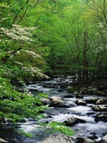 Stream in Lush Forest Photographic Print