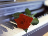 Red Rose on Piano