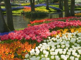 Buy Spring Tulips by Stream at AllPosters.com