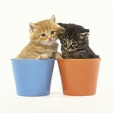 Orange and Tabby Kittens in Flower Pots