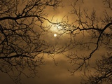 Buy Branches Surrounding Harvest Moon at AllPosters.com