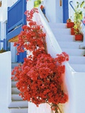 Flowers Blooming on Stairway