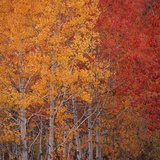 Deciduous Trees in Autumn