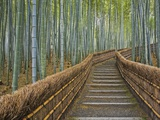 Bamboo Lined Path at Adashino Nembutsu-ji Temple Photographic Print