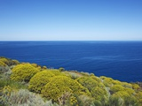 Buy Tree spurge on Stromboli Island at AllPosters.com