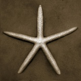 Buy White Starfish at AllPosters.com
