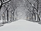Central Park in Winter Photographic Print