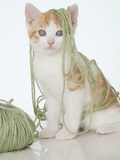 Kitten covered in yarn
