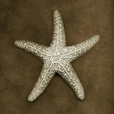 Buy Sugar Starfish at AllPosters.com