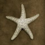Buy Sugar Starfish at AllPosters.com