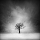 Solitary tree in a winter landscape Photographic Print