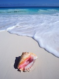 Mexico, Yucatan Peninsula, Carribean Beach at Cancun, Conch Shell on Sand