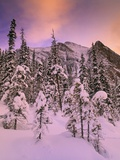 Snow Covered Trees at Lake Louise, Banff National Park, Alberta Canada