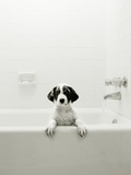 Puppy in a Bathtub
