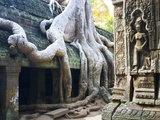 Tree roots overtaking Ta Prohm at Angkor Fotografie-Druck