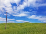 Telephone poles over grassy hills near Pienza