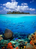 Buy Underwater Scene in the Tropics at AllPosters.com