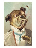 Postcard with a Smoking Bulldog and Bee