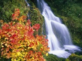 Autumn Leaves by Rushing Waterfall
