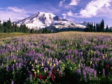 Wildflowers in Mt. Rainier National Park