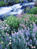 Stream Flowing Past Wildflowers