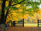 Fall Foliage Surrounds an Open Gate Photographic Print