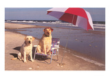 White Labradors at the Beach