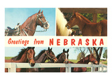 Horses, Greetings from Nebraska