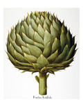 Artichoke, 1613